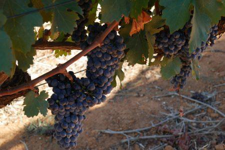 south-africa-delaire-stellenbosch-vines