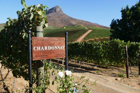 south-africa-delaire-stellenbosch-vineyard