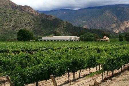 argentina-cafayate-vineyard