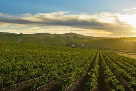 Australia-Clare -Valley-vineyard