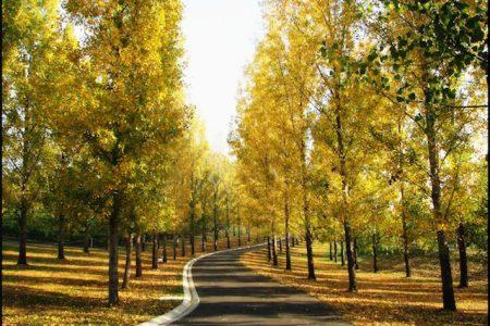 Australia-Yarra-Valley-forest