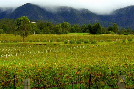 Australia-Hunter-Valley-vineyard
