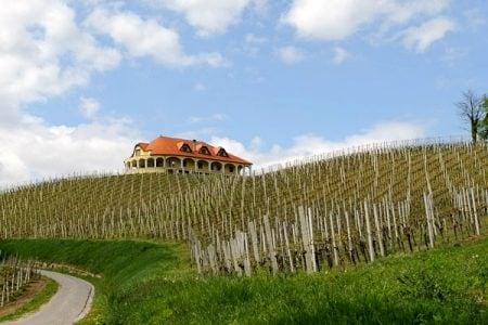 croatia-vineyard