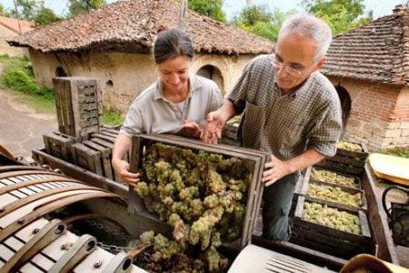 croatia-wine-grapes