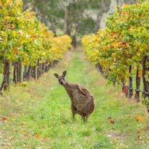 Our itinerary Wine Route of Australia - 14 days Vino Mundo