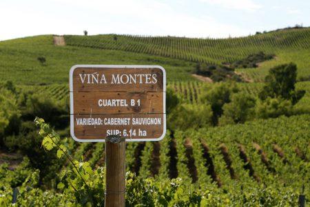 chile-vignes cabernet montes