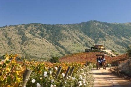 chile-wine-route-colchagua