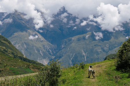peru-Carahuasi-vineyard-high-altitude