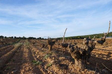 Spain-Cuenca-vineyard