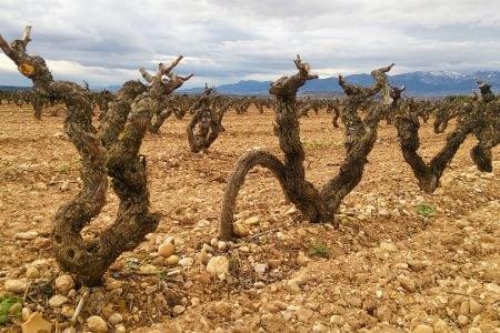 Spain-rioja-vineyard