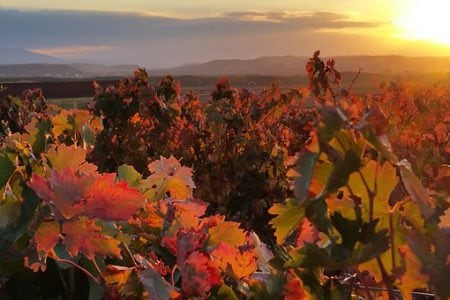 Spain's Rioja wine region