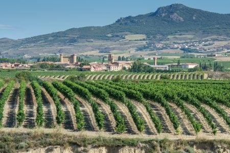 Spain vineyard sajazarra