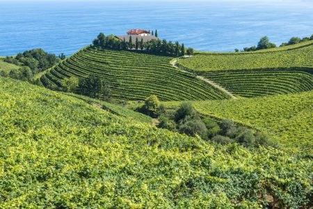 Spain vineyard getaria