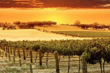 australia-hunter-valley-sunset
