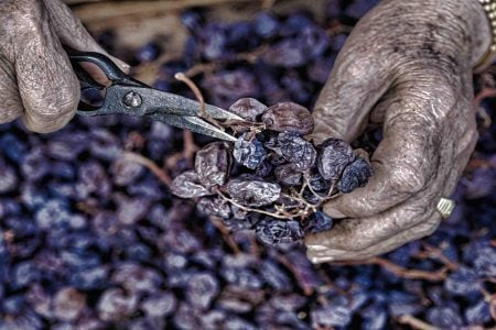 spain-andalusia-dry-grapes