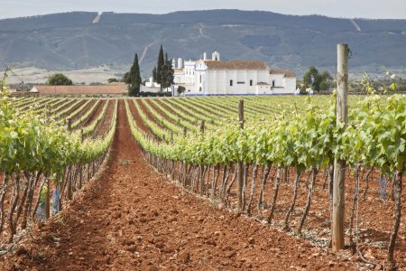 Alentejo - Wines of Portugal