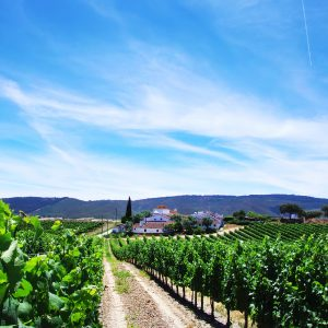 Our itinerary The most beautiful vineyards of the Douro in 8 days Vino Mundo