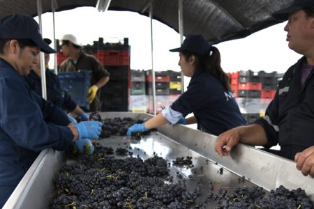 chile-grape-selection-montes