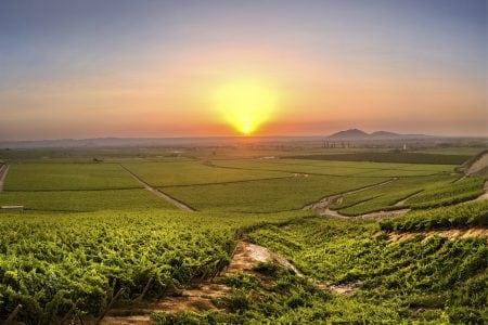 peru-vineyard-Vino-Mundo