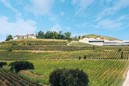 portugal-adega-casa-santos-lima-vineyard