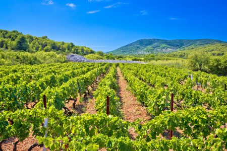vis-island-vineyard-croatia