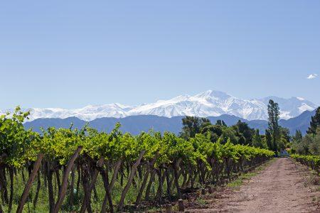 Argentina-Mendoza-vineyard