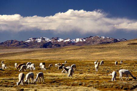 peru-altiplano-arequipa