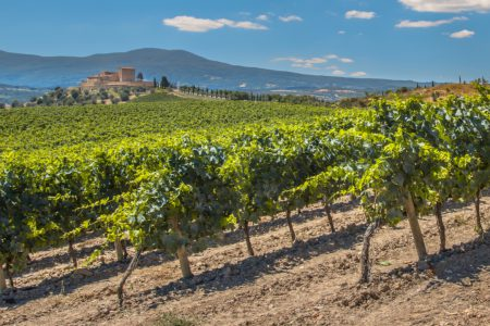 The vineyards of la Rioja and north of Spain