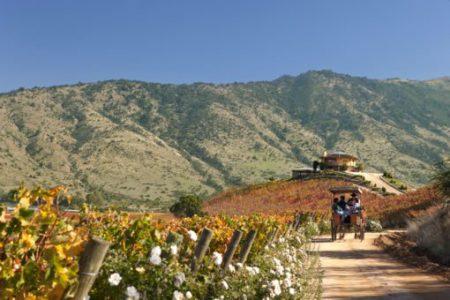 chili-wine-route-colchagua