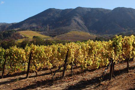 south-africa-vineyard-groot-constantia