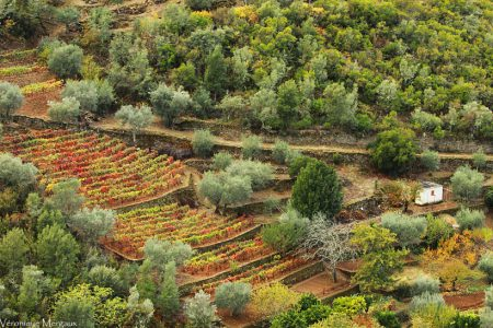 Portugal-pinhao-quinta-do-panascal