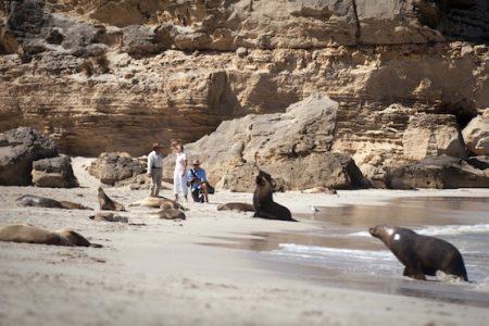australia-kangaroo-island-seal-bay