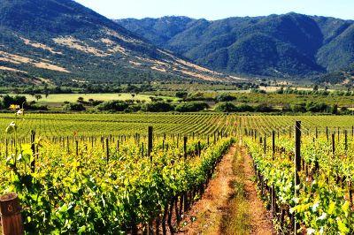 bolivia-santa-cruz-vineyard