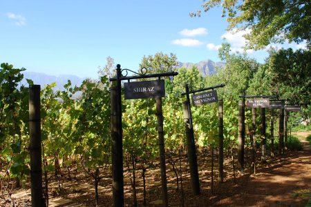 south-africa-shiraz-cabernet-sauvignon