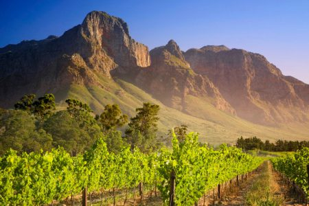 vineyard-franschhoek-south-africa