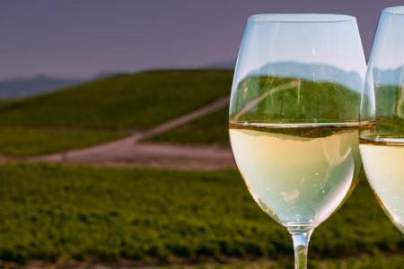 vineyards-chile