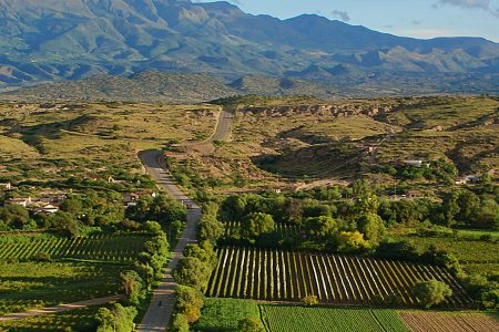 bolivia-vineyard