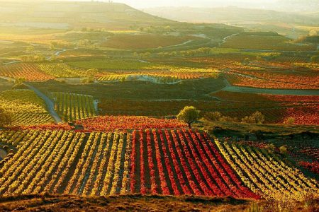 chile-vineyard-autumn