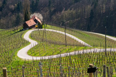 Heart shaped wine road in Slovenia in autumn