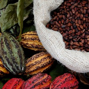 Our itinerary Wine & Chocolate, an Ecuador full of senses Vino Mundo