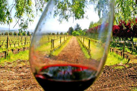 Vineyard Mexico