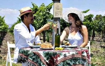 Vineyard dos buhos_san miguel de allende_Mexico