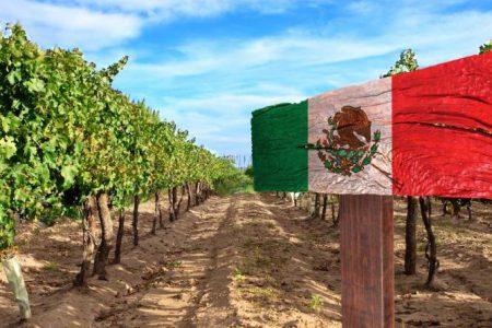 Mexico Vineyard