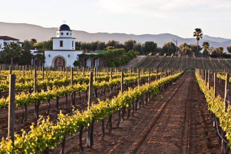 Mexico-wine valley Guadalupe-Baja California