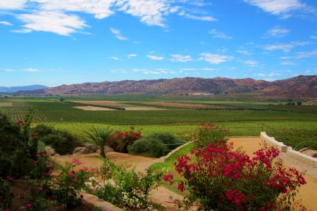 Mexico-Guadalupe Valley vineyards-baja california