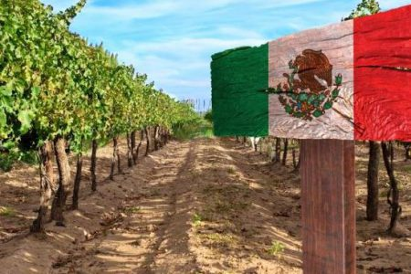 Mexico vineyard banner